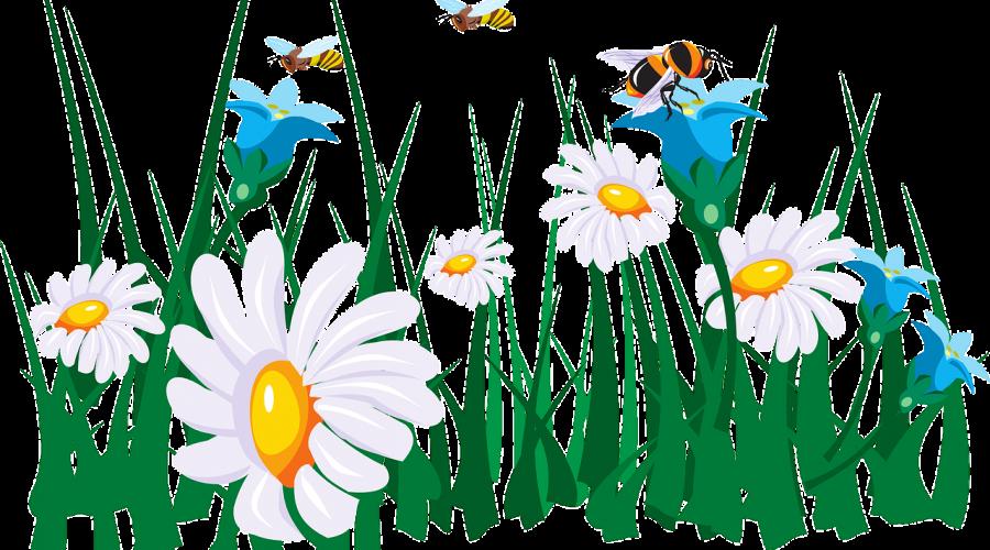 flowers-45786_1280